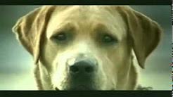 Der lebensmüde Hund