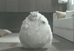 Fette Katze beim Fitnessprogramm