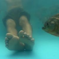 Baden mit Piranhas