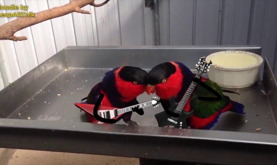 Rockende Vögel