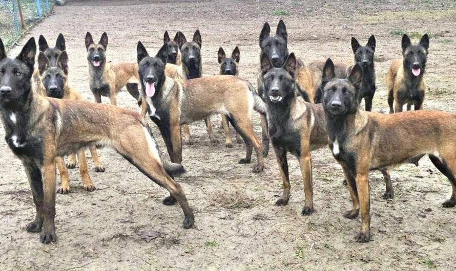 Trainierte Hunde